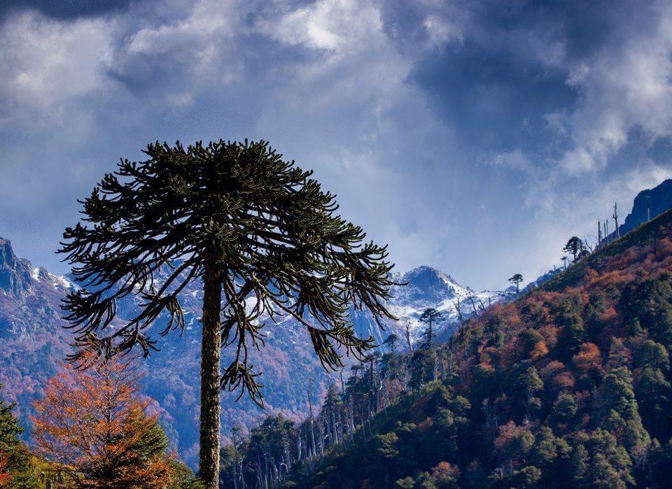 Región de la Araucania.CHILE, AMO A MI  CHILE