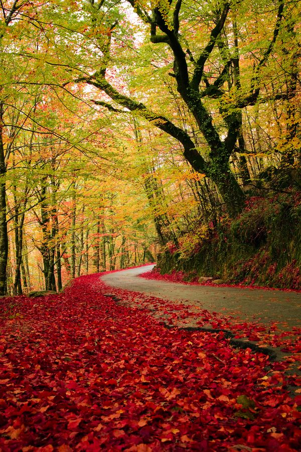 Gêres National Park, Portugal - Autumn Road by cristovao Oliveira, via 500px