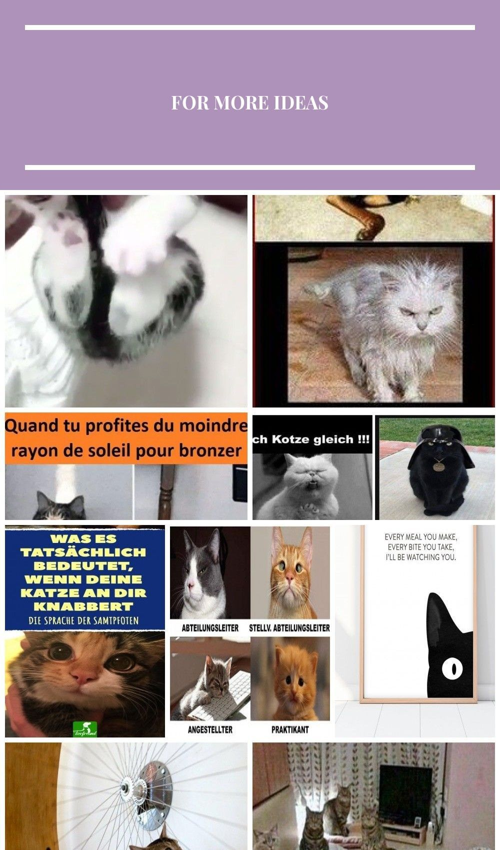 They Say That A Dog Is Man S Best Friend But Every Cat Owner Knows This Isn Cat Dog Friend Katzenwitzig Mans Owner Cat Owners Cat Facts Cat Lovers