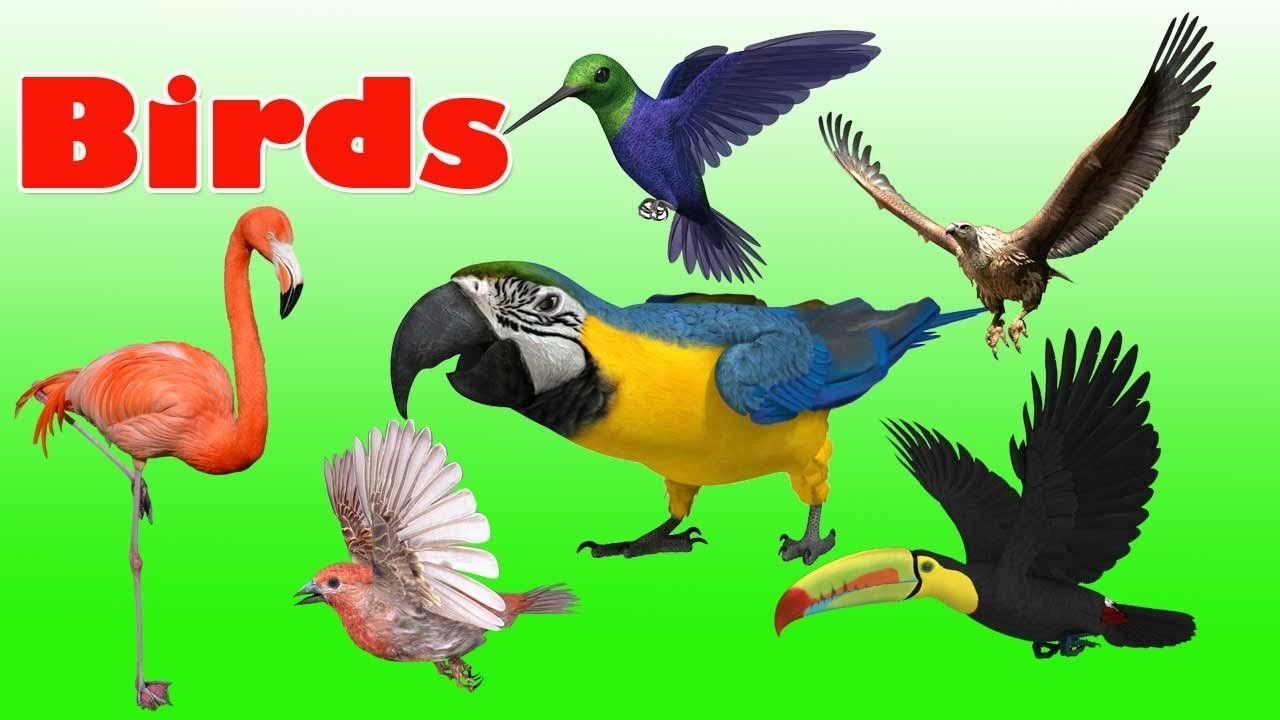 Birds Name And their sounds | Learn about birds | Different types of