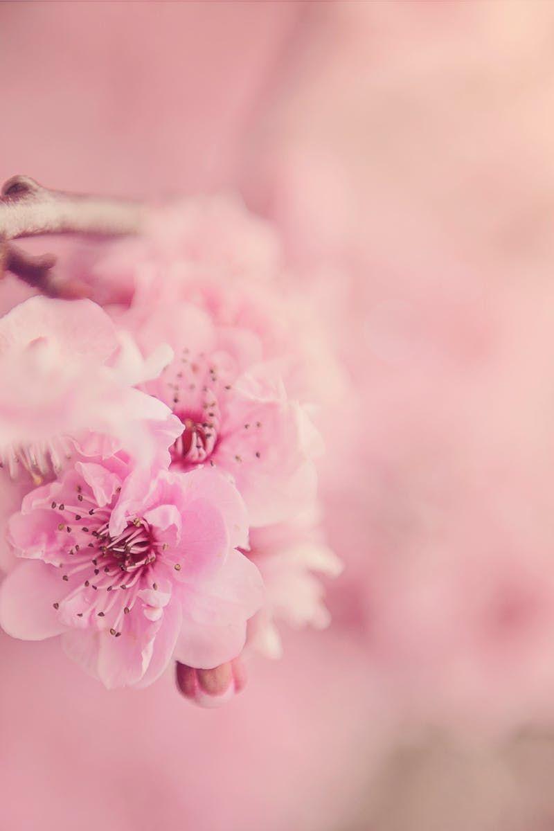 Photo by Kat Jayne. Discover more free photos from Kat: https://www.pexels.com/u/katlovessteve/ #nature #flowers #petals