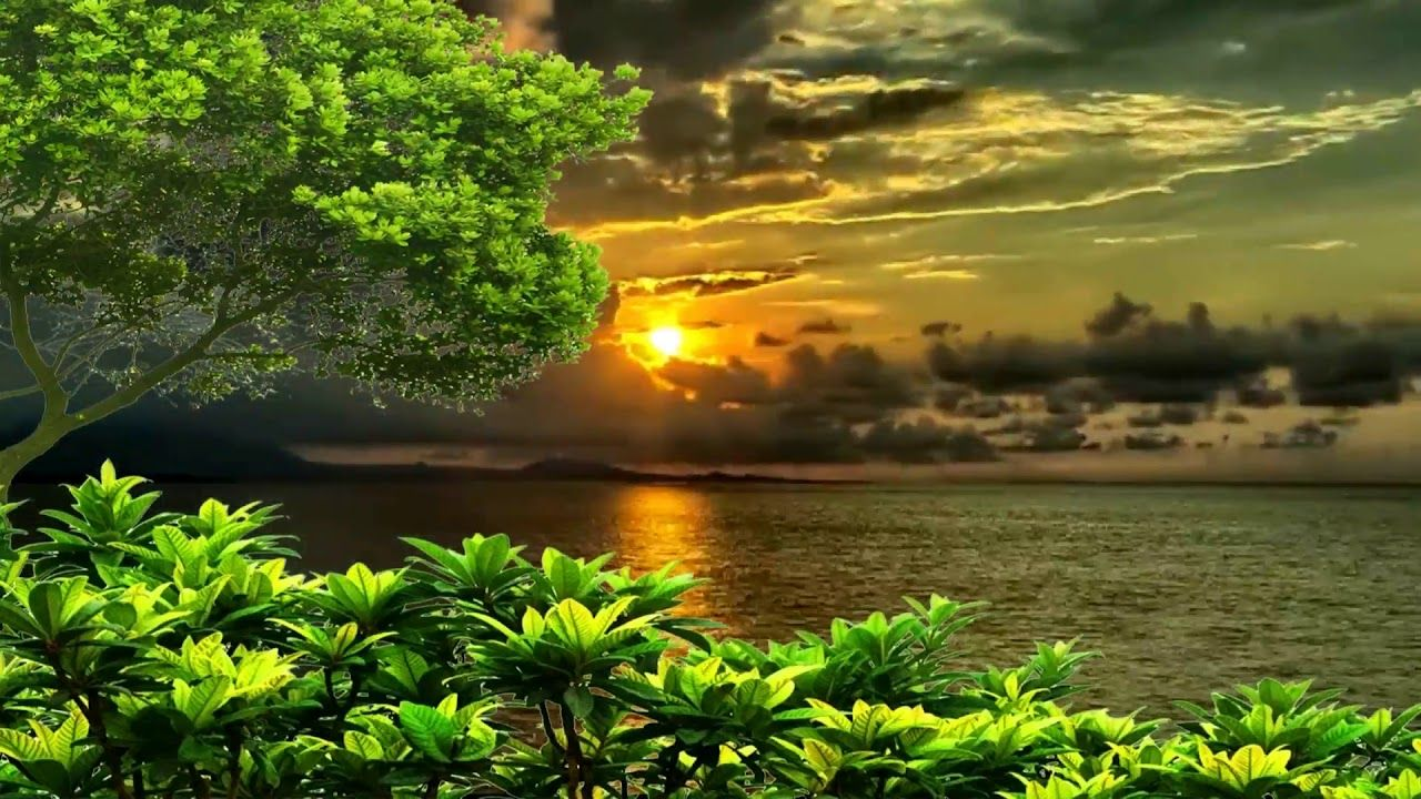 Beautiful Nice Animation With Natural Tree Scenery Sea Beach Background Scenery Nature New Background Images