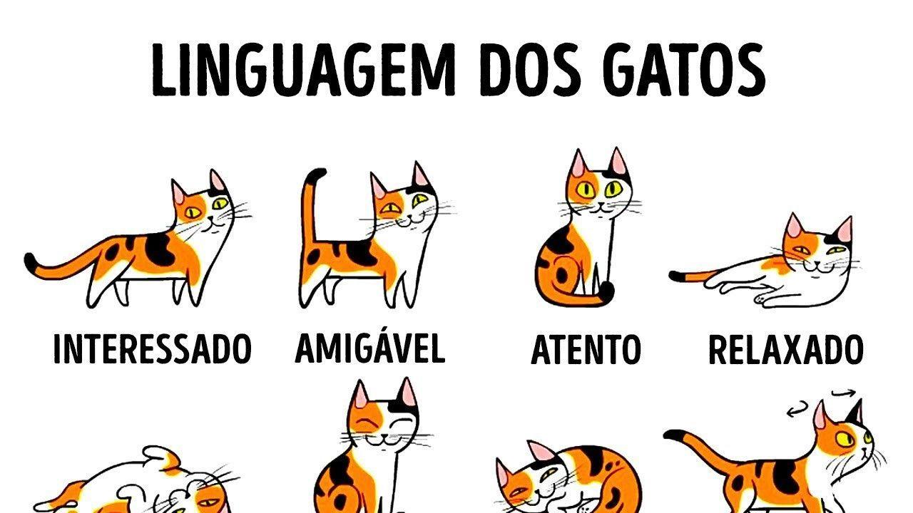 o idioma felino