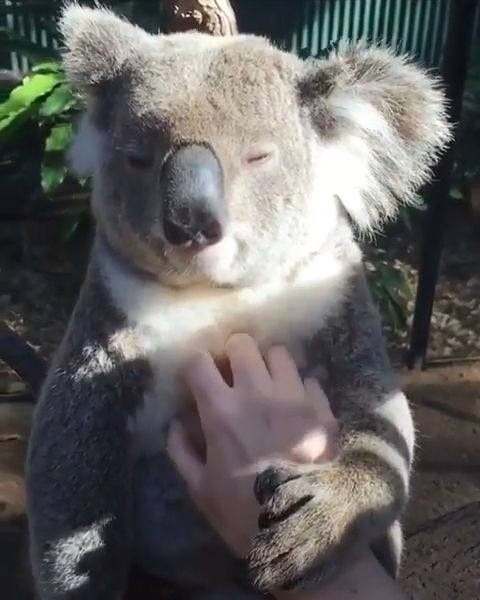 He is really enjoying that massage please follow Animals Board for more videos