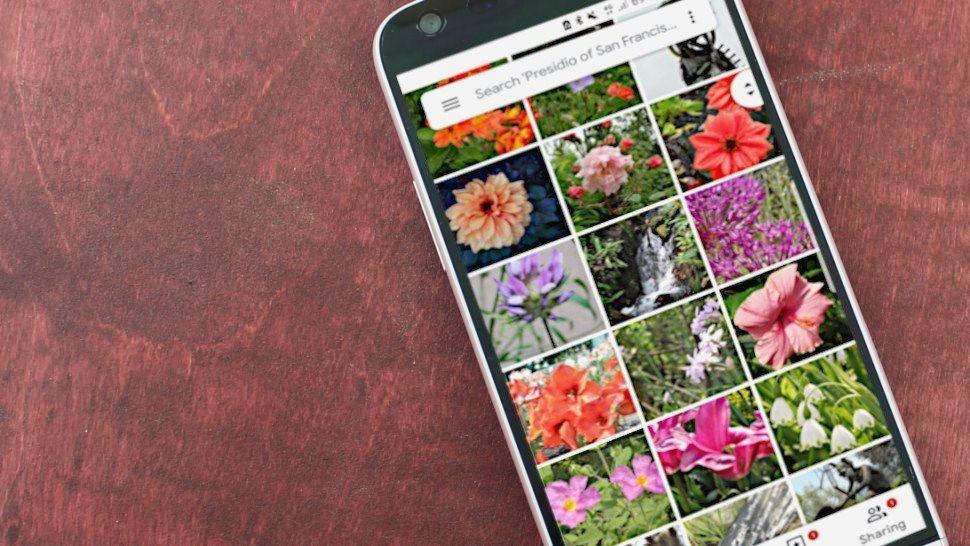 تطبيق صور قوقل أصبح يتيح نسخ النصوص من على الصور Photo Backup Photography Projects Ios Photo App