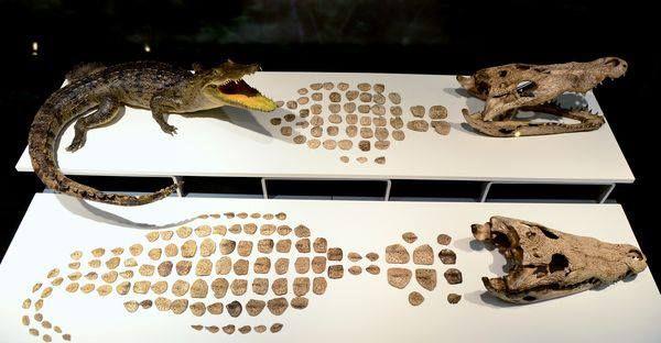 Crocs, one of the many animals sacrificed by the Aztecs