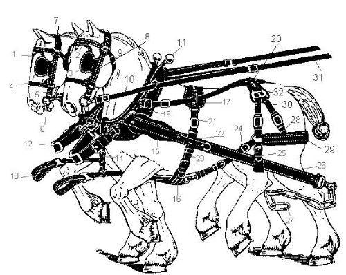 Mot cl harnais am ricains hippotese le cheval de - Dessin cheval de trait ...