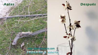 Flores de tela en rama