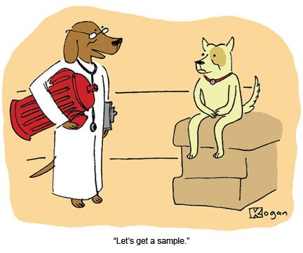 This is not proper urine sample collection procedure. | Humor ...