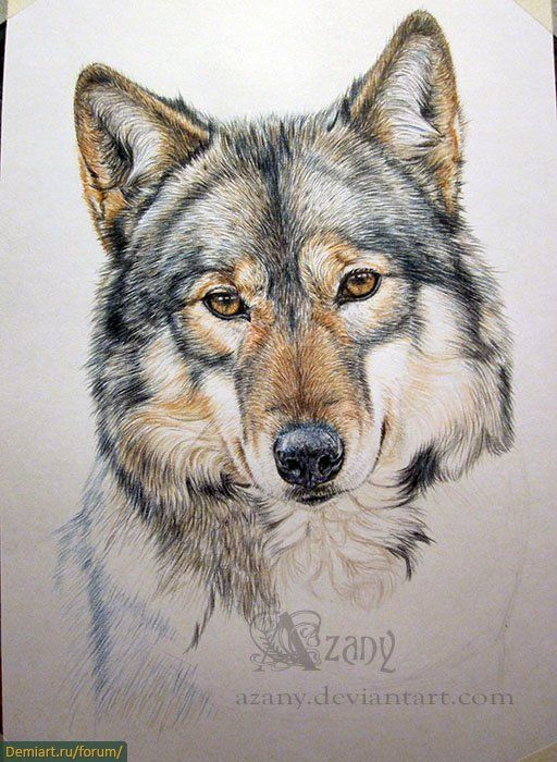 Рисунок карандашом физалис 2