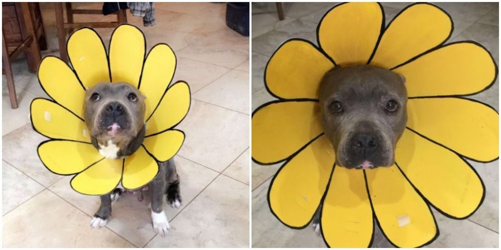 This Mom Came Up With A Brilliant Way Of Decorating Her Dog S Cone