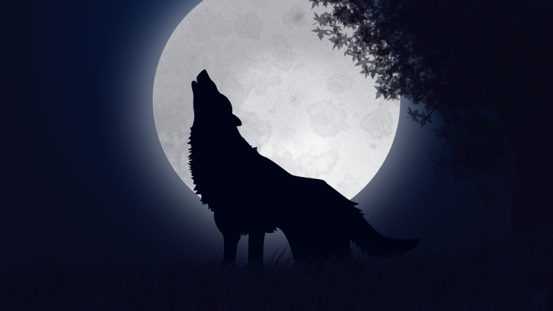 loup hurle soir pleine lune illustration foret nuit noire. Black Bedroom Furniture Sets. Home Design Ideas