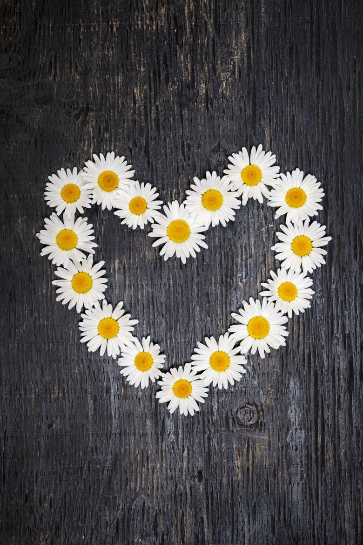 Daisy heart by elena elisseeva daisies pinterest flowers daisy heart by elena elisseeva izmirmasajfo