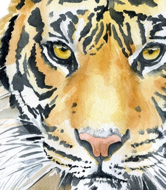 Cool Tiger Watercolor Artwork