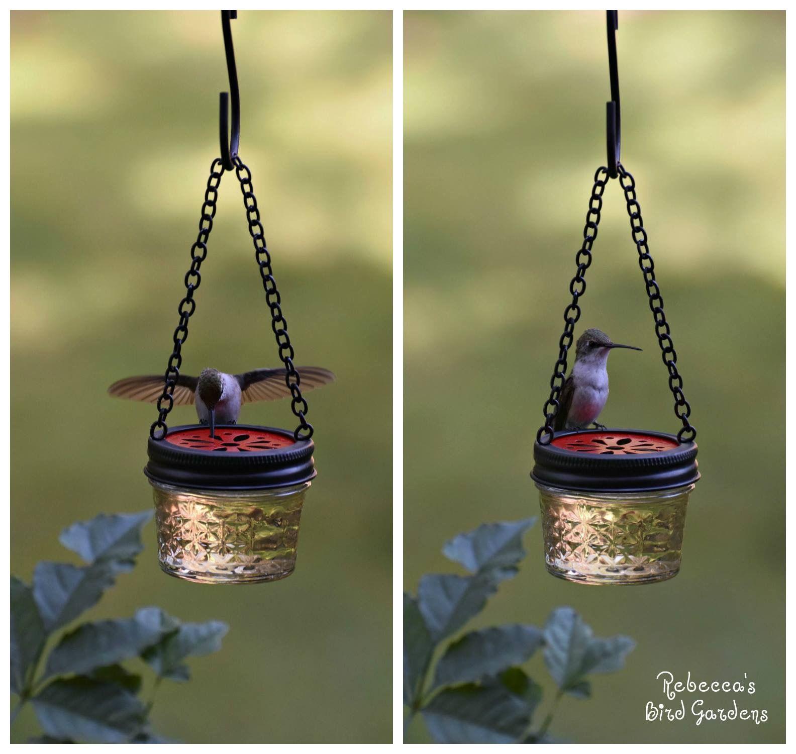 DIY mason jelly jar hummingbird feeder