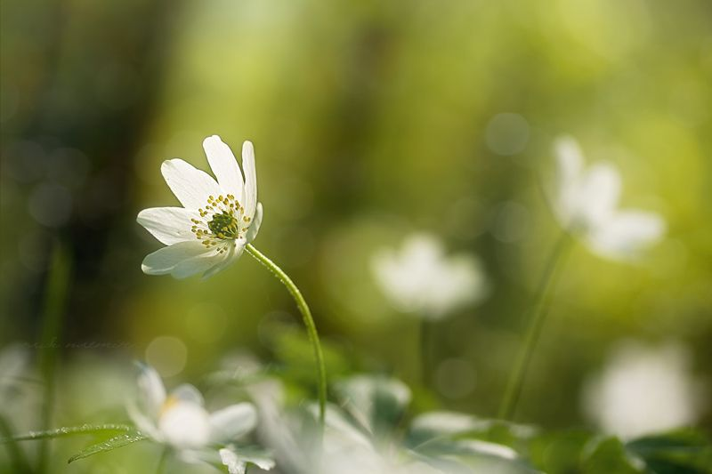 """""""wind-flower"""" by юля плетінка"""