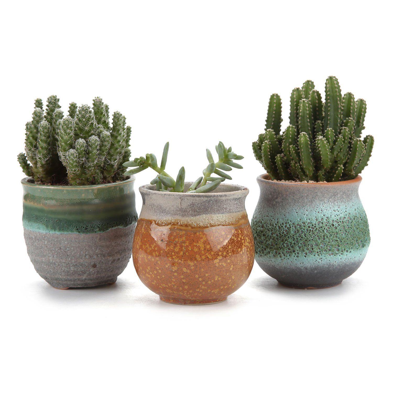 Amazon Com T4u 2 75 Inch Ceramic Summer Trio Succulent Plant Pot X2f Cactus Plant Pot Flower Pot X2f Conta Cactus Plant Pots Cactus Plants Indoor Plant Pots