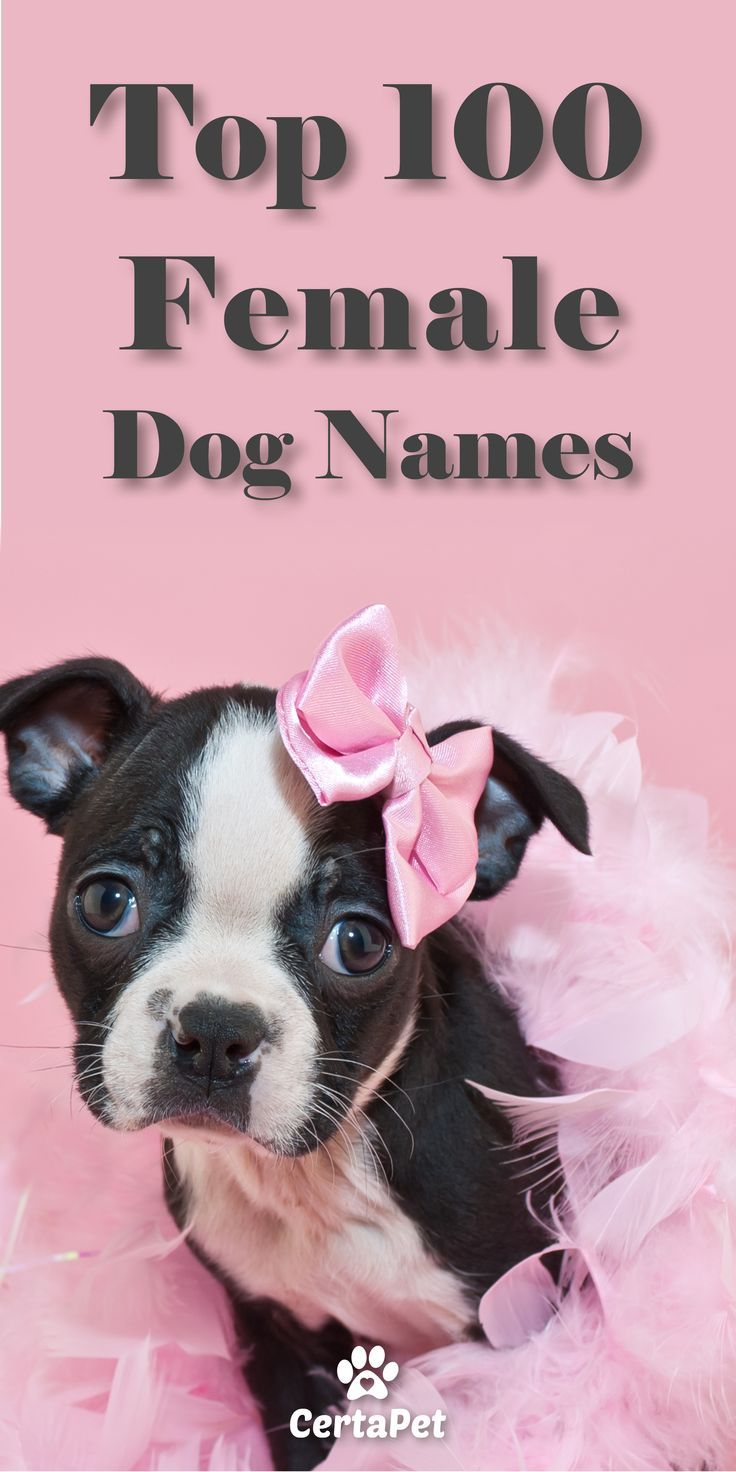 Home Female dog names, Dog names, Dogs names list