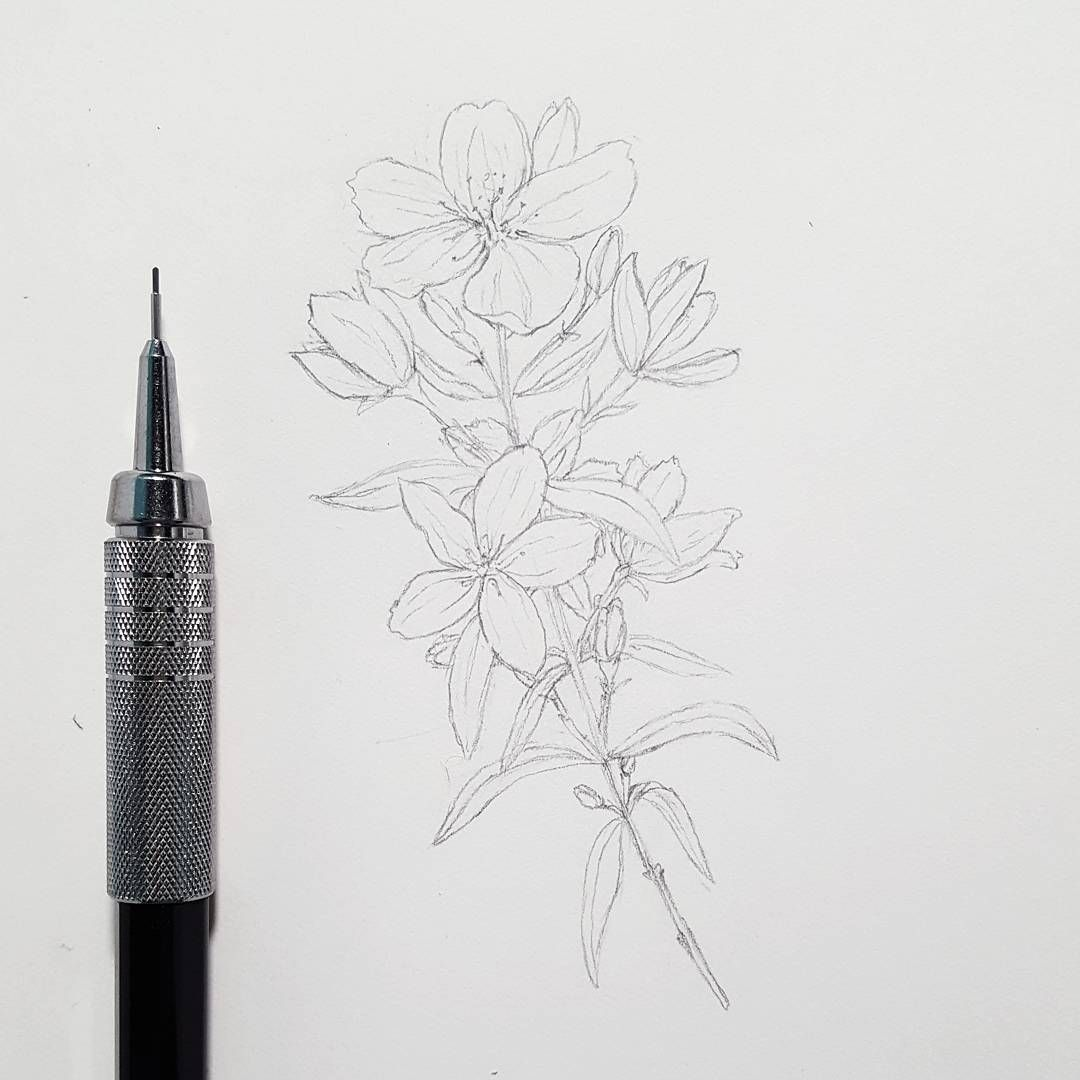 Working on my first commission itll be part of a tattoo drawing itll be part of a tattoo drawing flowers jasmine tattoo httpmisstagramipost1543017250175696436codebvp5gohbb40 izmirmasajfo