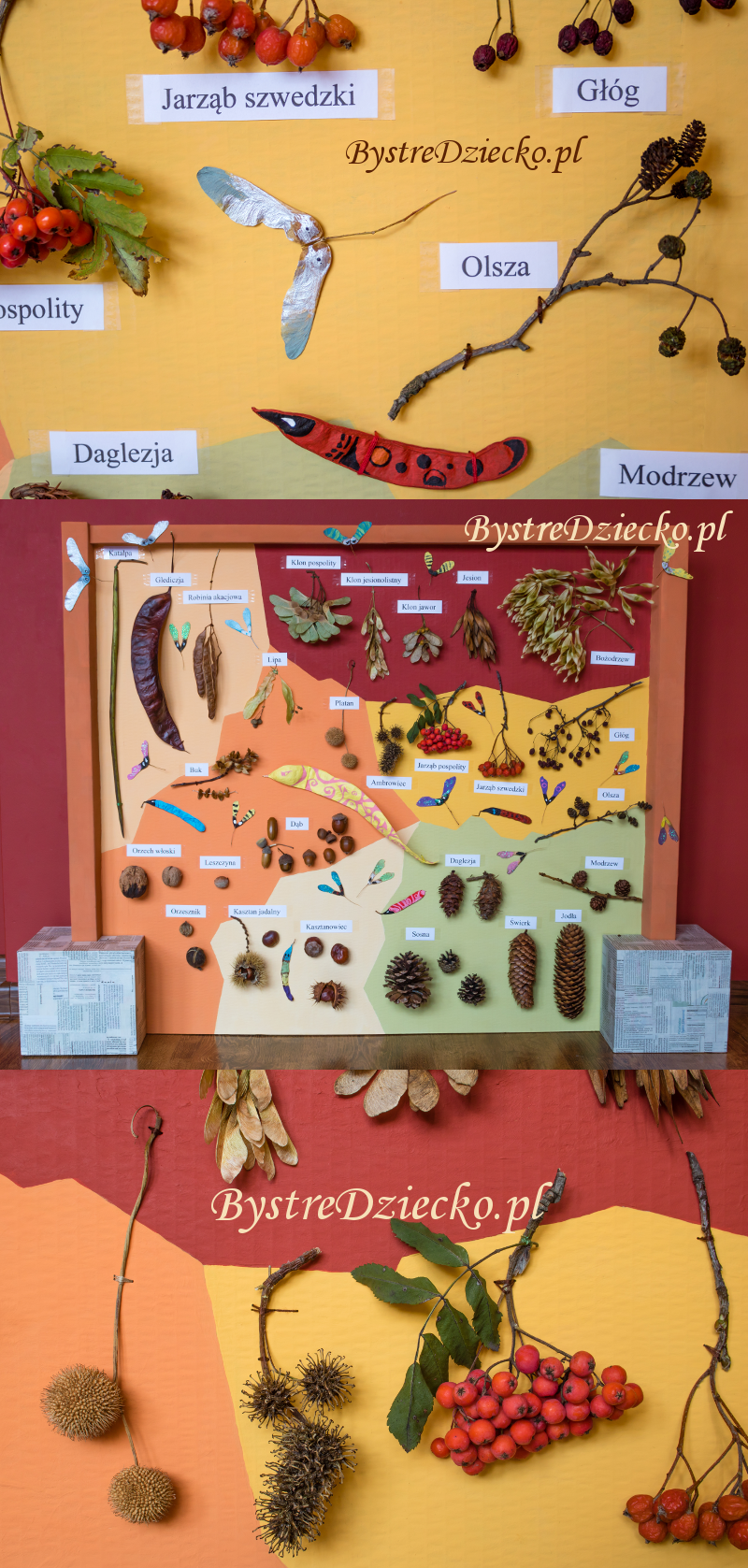 Fall, autumn crafts - Educational board for kids, botanical model of fruit trees - cone, maple, acacia, rowan, etc.