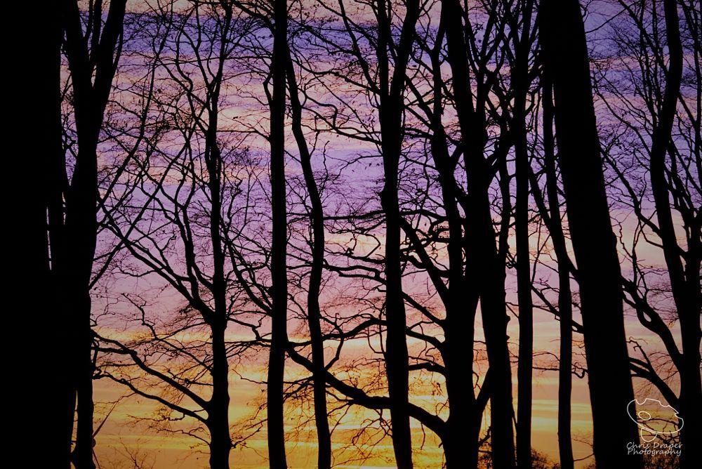 Woodland Sunset by Chris Draper on 500px
