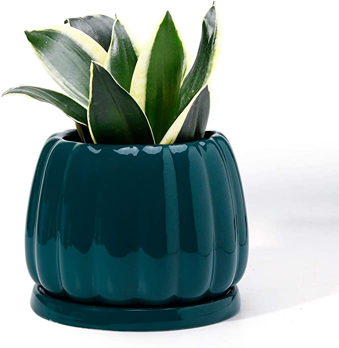 Amazonsmile Potey 052904 Plant Pot With Drainage Hole Saucer 4 7 Inch Glazed Ceramic Modern Pumpkin Shaped Planters In 2020 Plants Planting Flowers Indoor Bonsai