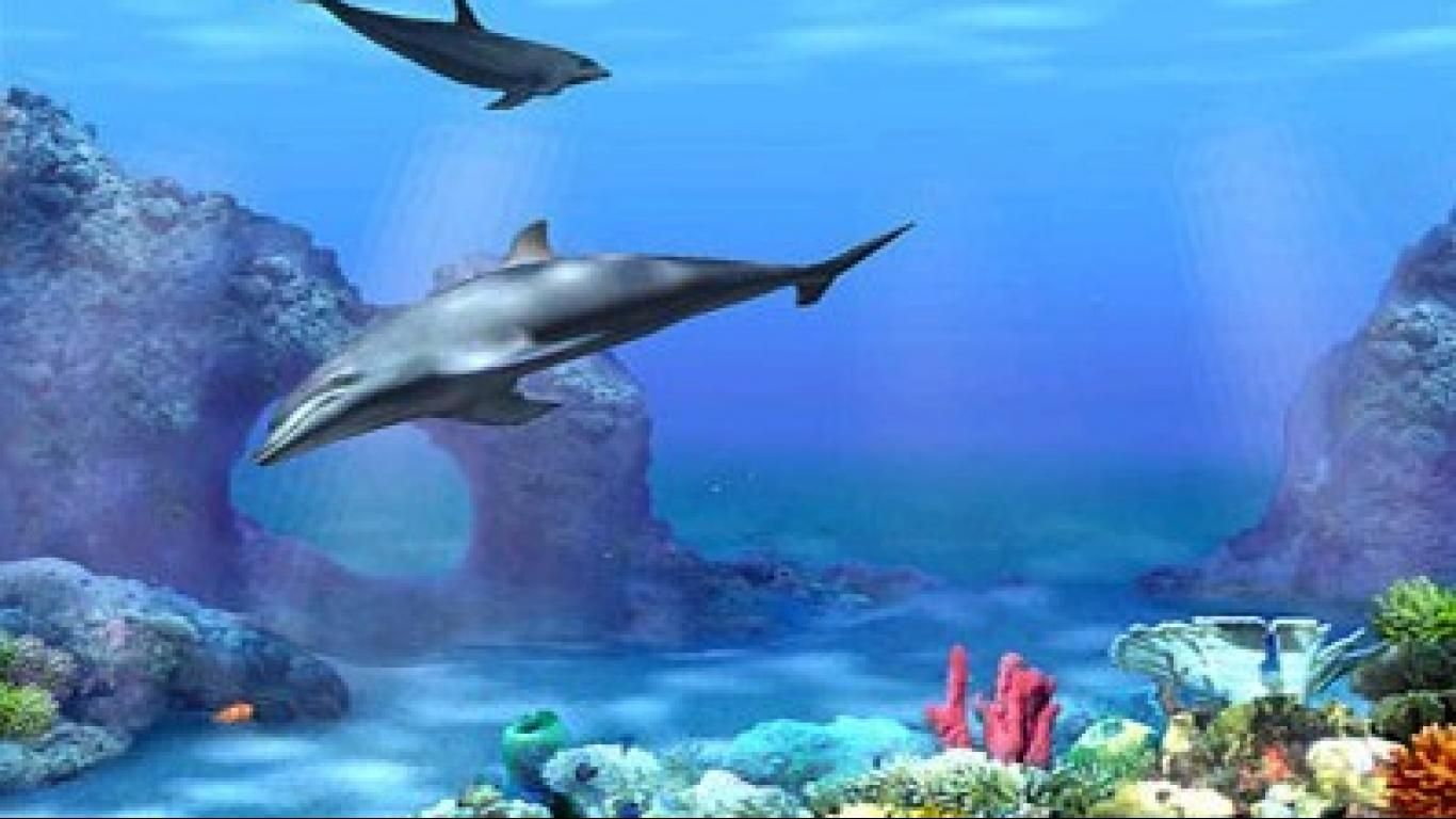 Dolphin Screensavers   Dolphin Aqua Life 3D Screensaver