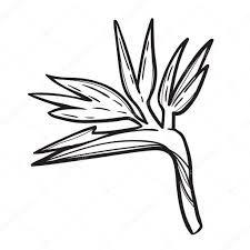 R sultat de recherche d 39 images pour coloriage a imprimer fleurs exotiques dessin bouillottes - Coloriage a imprimer fleurs exotiques ...