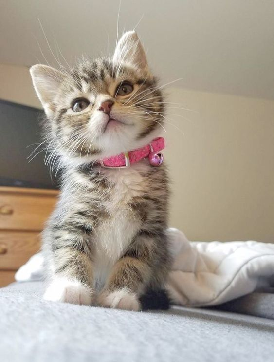 Adorable kitty with a little bell around her neck