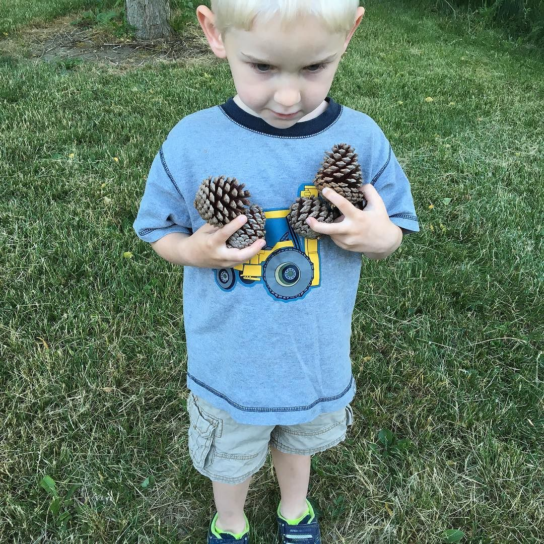 Who collects pine cones looks like pitch pine were collected from the bin at work  someone is working overtime.?#treestalk #treeseed #pinecones