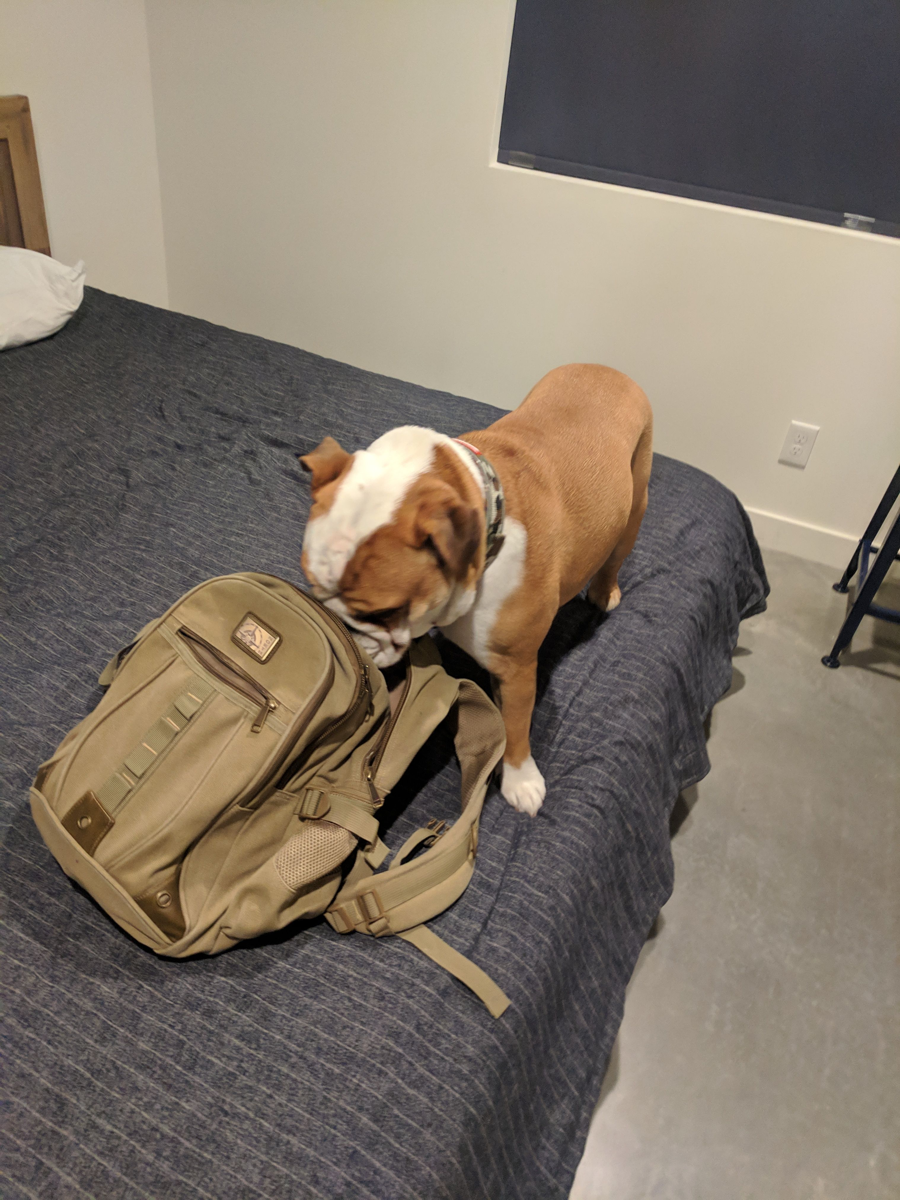 19++ Airbnb emotional support animal images
