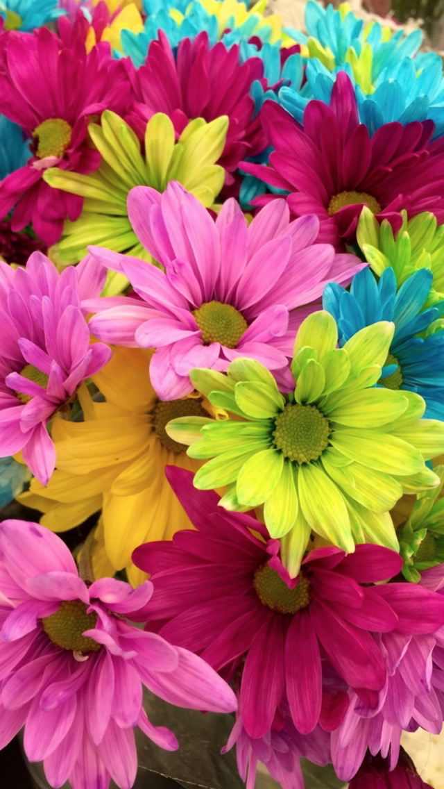 Multi color flowers wallpaper iphone wall paper in 2018 multi color flowers wallpaper iphone mightylinksfo