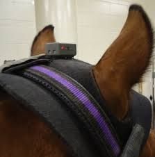Image result for horse monitoring sensors
