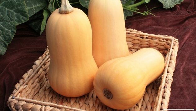Squash Little Dipper F1 Little Dipper is a small, traditional-shaped butternut squash that is easy to grow and cook. Little Dipper weighs in at about 2 pounds per fruit, the right size for a small family dinner or batch of soup.