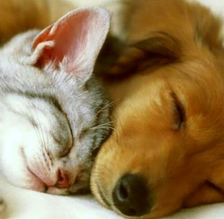 Pin By Karen Lilli On So Sweet Dogs Hugging Kittens And Puppies