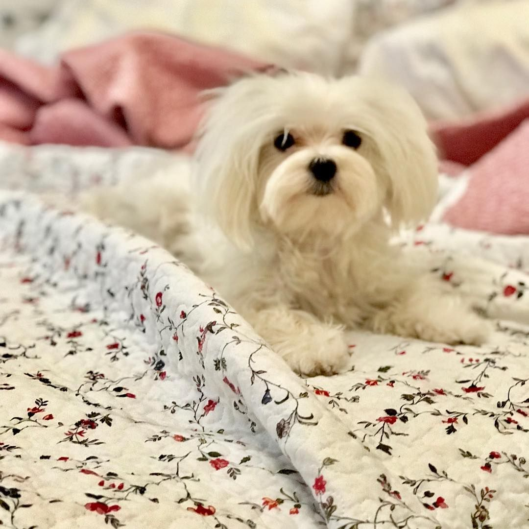 Good Morning Have A Nice Week Dog Gifts Dogs Animals
