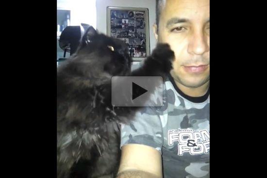 Cat Demands More Petting Love Meow Cats Pets Cat Love