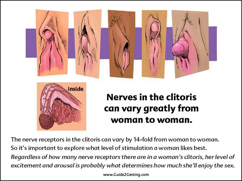 Clitoris nerve endings photo 158