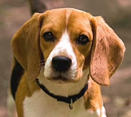 Shiloh Pictures Dog Shiloh Shiloh Treasures 5 Glogster Edu