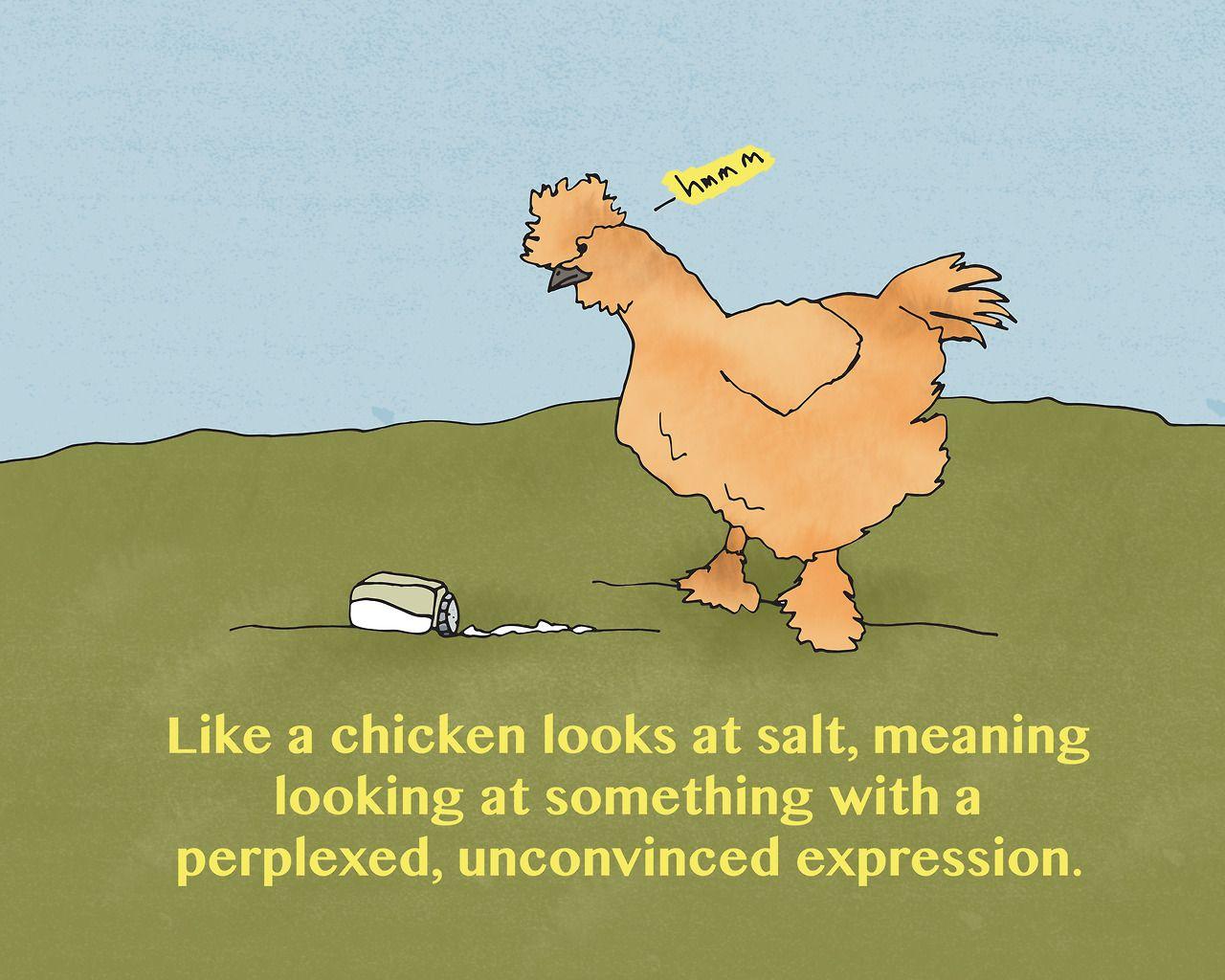 Cómo gallina mira sal.