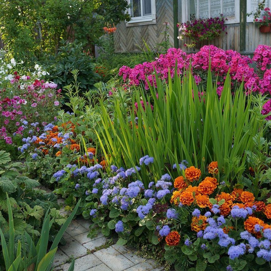 фанат дачного цветник в саду и огороде фото берегу будет