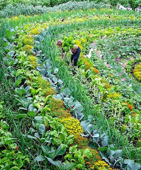 Associer Les Cultures Jardin Permaculture Jardin Potager Jardinage