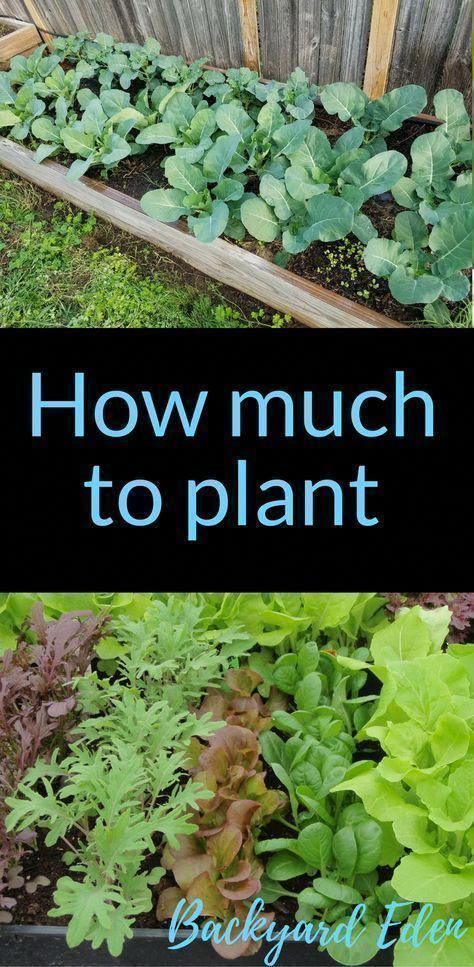 How much to plant much to plant | How many of each plant to grow | Organic Gardening | Organic Gardening for Beginners | Planning a garden | Organic Fertilizers | Gardening Tips | Vegetable Gardening | Backyard-
