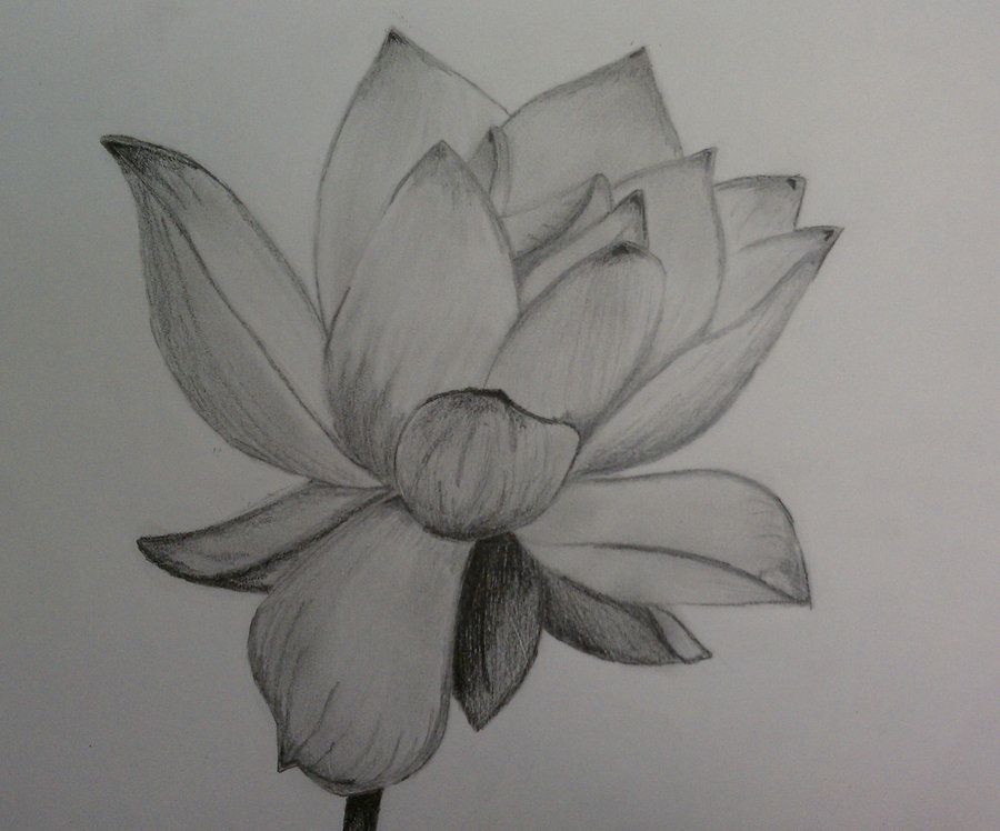 Lotus Flowers Drawings flower drawings in pen...