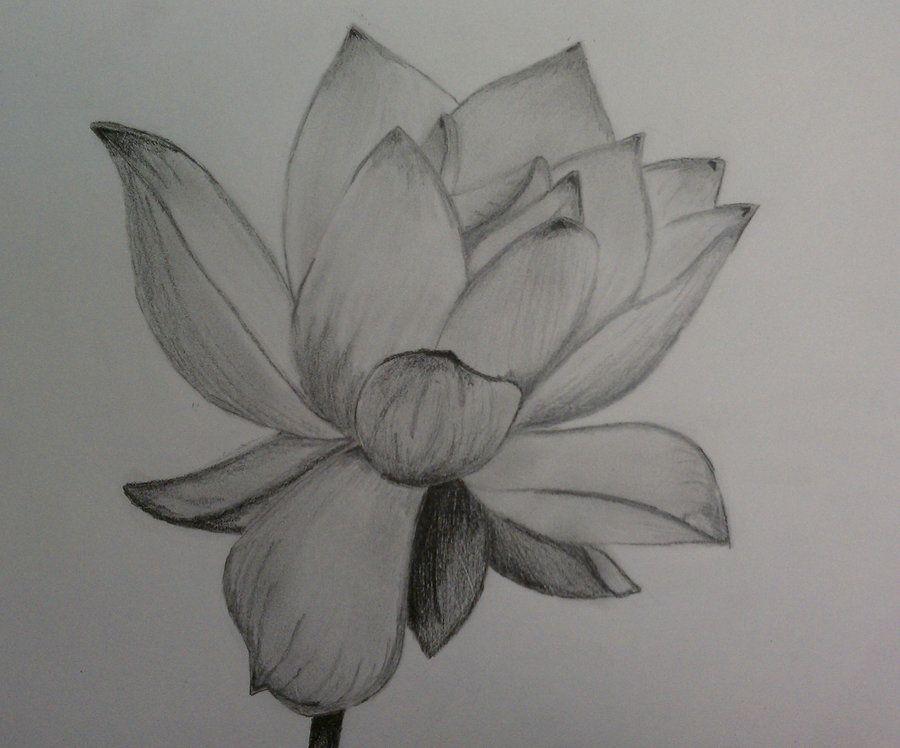Pencil Of Lotus Flower By 1koolwhip On Deviantart Flower Drawing Flower Drawing Pencil Pencil Drawings