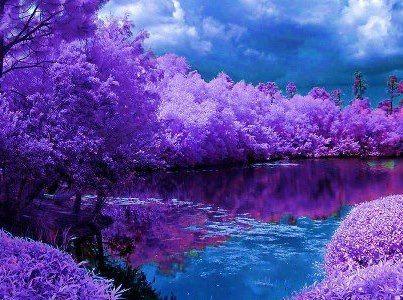 Beautiful Purple And Blue Beautiful Photography Nature Beautiful Nature Purple Trees