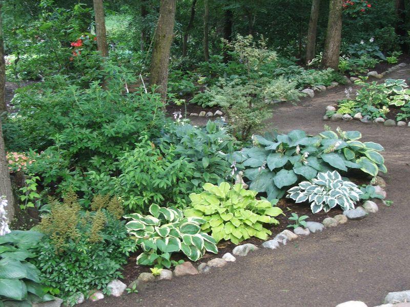 white oak nursery hosta specialists customer photos - White Oak Garden Center