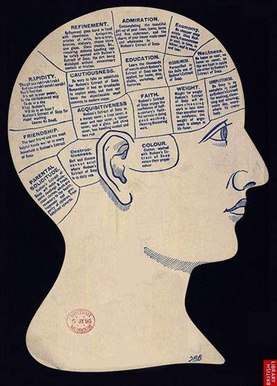 Names of the Phrenological Organs Vintage Anatomy Phrenology Poster