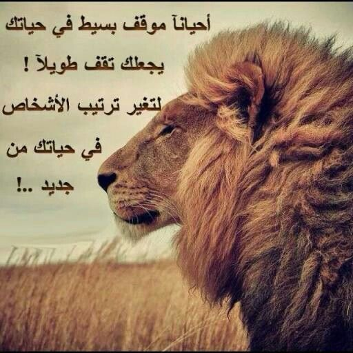 Pin By Adid Soul On Soul Adid Animals Lion