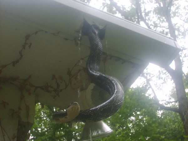 If This One Piece Gutter Guard System Can T Keep Snakes
